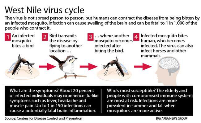 West Nile Fieber